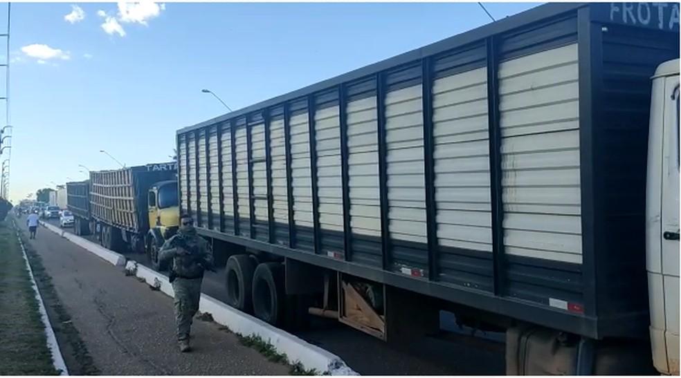 Gado foi escoltado do Maranhão para o Tocantins — Foto: Polícia Civil/Divulgação