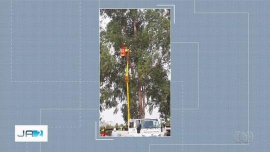 Gato é resgatado após ficar 9 dias em árvore a 32 metros de altura, em Piracanjuba