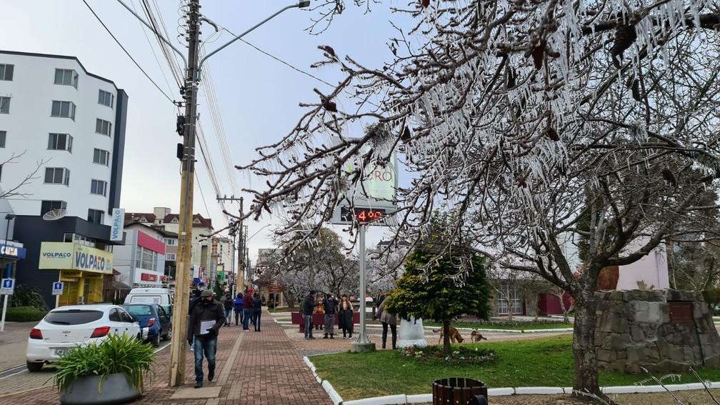 Árvore congelada no Centro de São Joaquim nesta terça-feira (29) — Foto: Foto: Mycchel Leganghi/São Joaquim Online