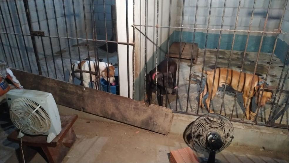 Animais foram achados em chácara de peruano, em Itu  — Foto: Fernando Belon/TV TEM