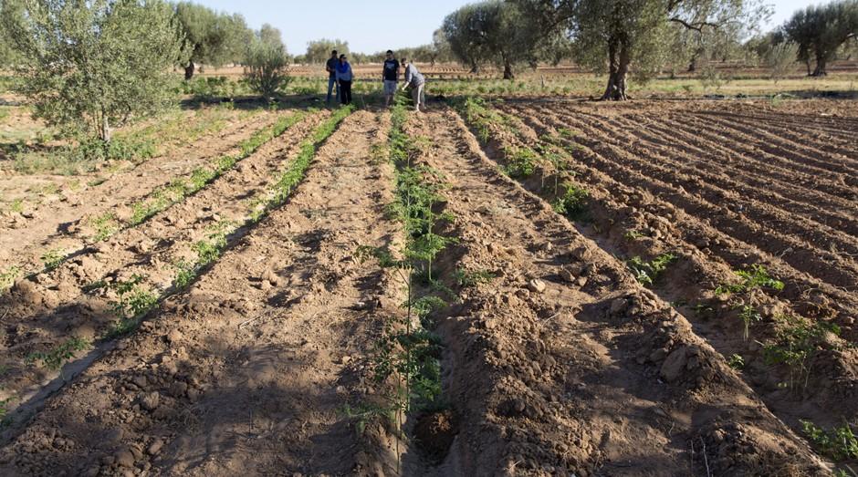 Ela lidera o projeto Acácia Para todos. A iniciativa planta árvores na terra seca do país e cria condições para a agricultura familiar. (Foto: Divulgação)