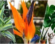 Plantas tropicais: 11 espécies nativas para cultivar!