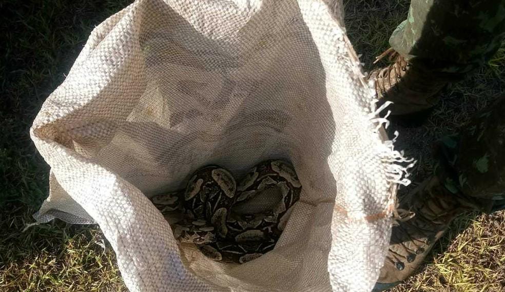 Cobra foi encontrada em Ilhéus, no sul da Bahia, na manhã desta quinta-feira (28).  — Foto:  Companhia Independente de Polícia de Proteção Ambiental (Cipa)