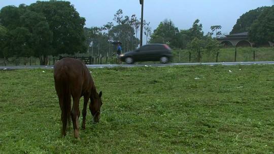 Animais soltos nas BRs causaram mais de 50 acidentes em um ano em Alagoas