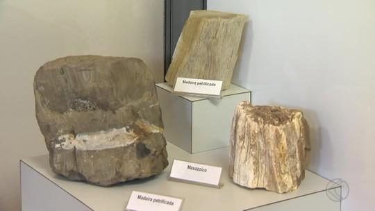 Museu em Viçosa guarda artigos que pertenciam ao Museu Nacional