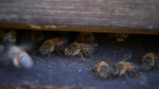 Morre idoso que levou mais de duas mil picadas de abelha ao andar de bicicleta em rodovia