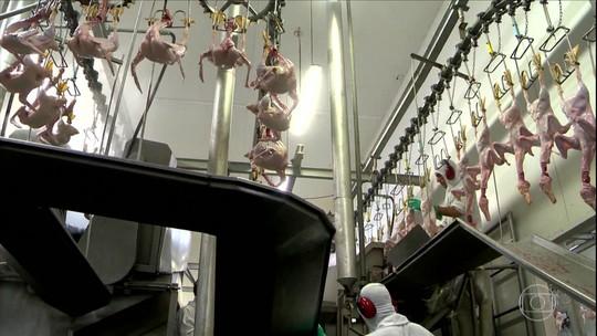 Suspensão de exportações para Arábia Saudita preocupa frigorífico de patos em SC
