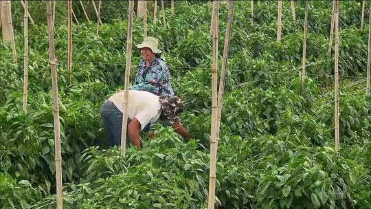 Trabalhador rural só poderá pedir aposentadoria aos 60 anos