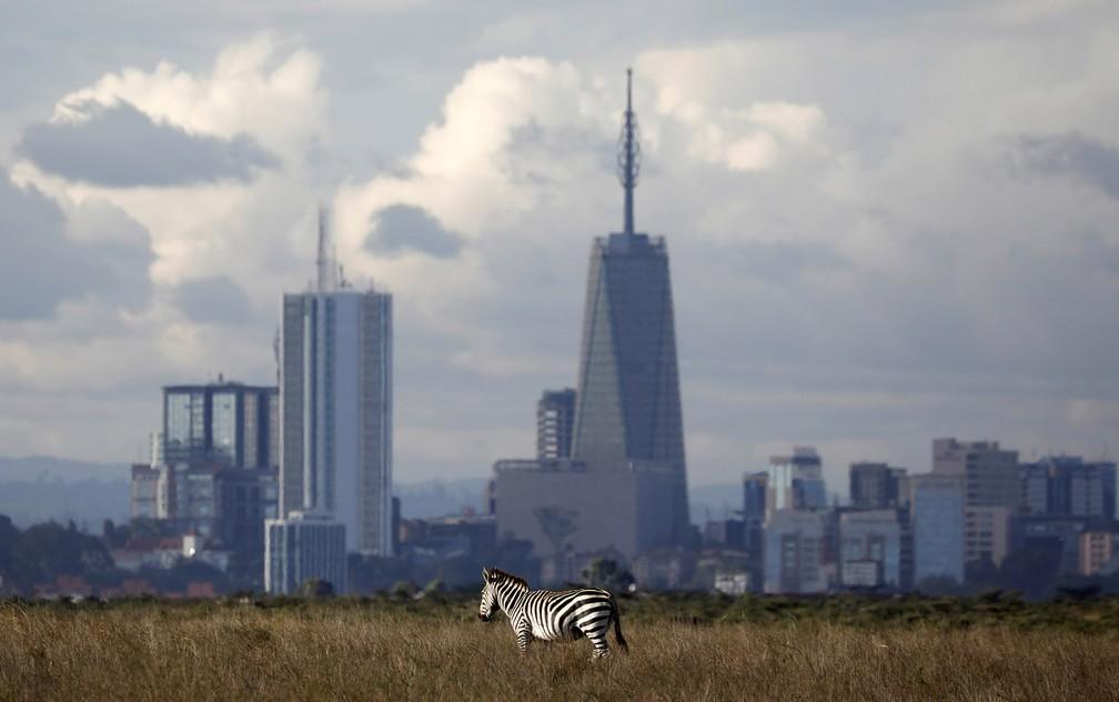 Uma zebra pasta em área de savana do Parque Nacional de Nairóbi perto de prédios da capital do Quênia — Foto: Amir Cohen/Reuters