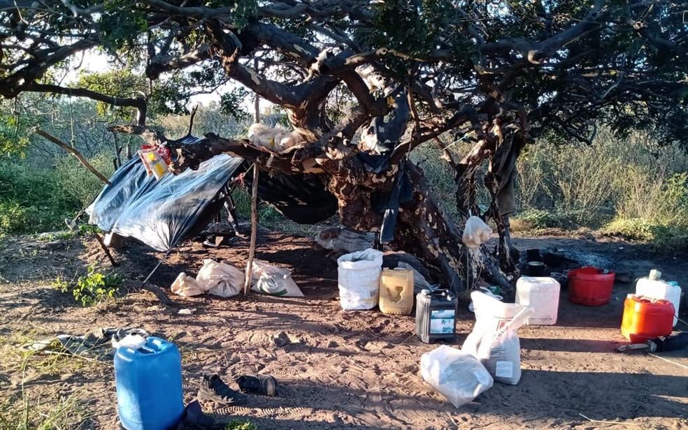 Plantação com 20 mil de pés de maconha é achada em povoado do norte da Bahia . — Foto: SSP-BA / Divulgação