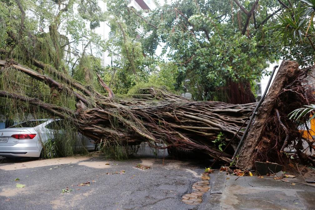 Árvore cai sobre carro e interdita a rua Maria Eugênia no Humaitá, Zona Sul do Rio de Janeiro — Foto: Marcos Serra Lima/G1