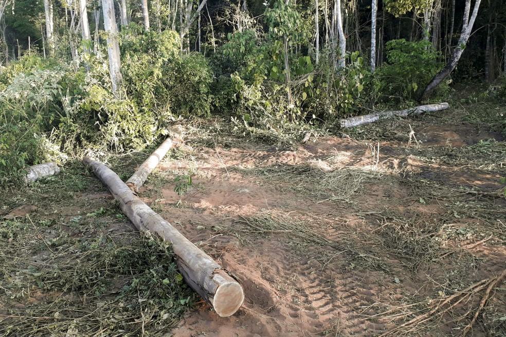Vegetação em área de floresta era derrubada com tratores — Foto: Ibama/Divulgação