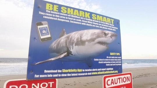 Ataques de tubarão voltam a ameaçar local onde brasileiro morreu nos EUA