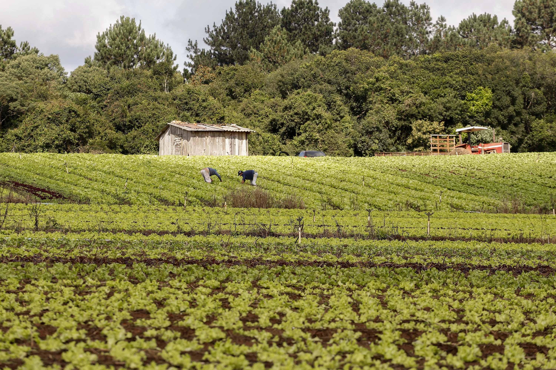 Governo lança edital para compra de R$ 20 milhões em alimentos da agricultura familiar no Paraná