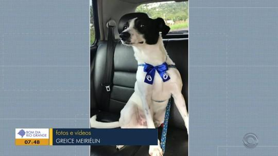 Cachorro agredido e baleado em Nova Hartz é adotado