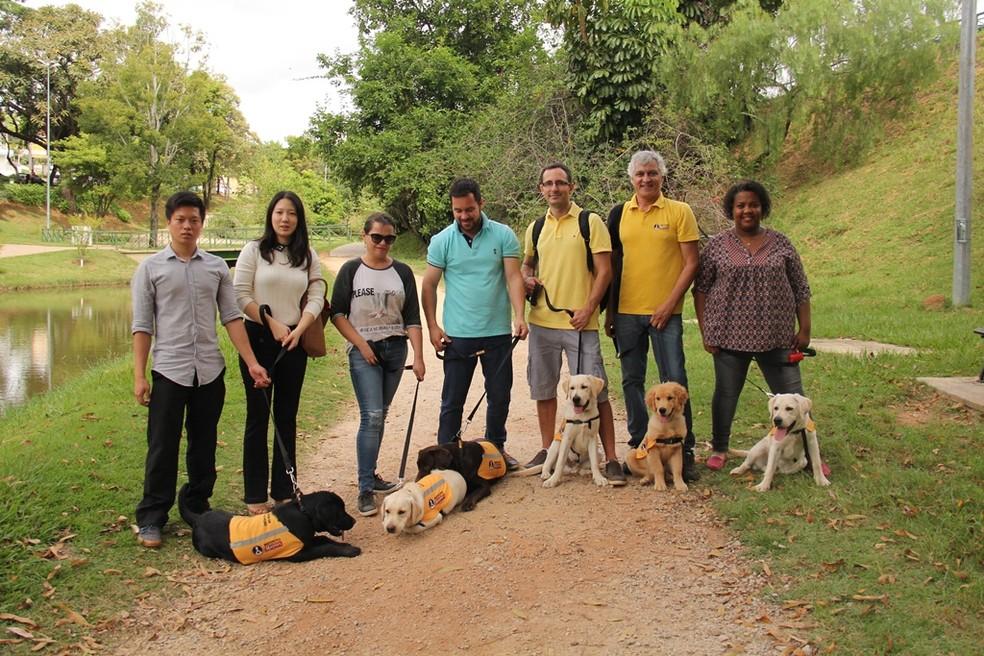 Cães-guias formados no Instituto Magnus ajudarão as pessoas com deficiências visuais (Foto: Divulgação)
