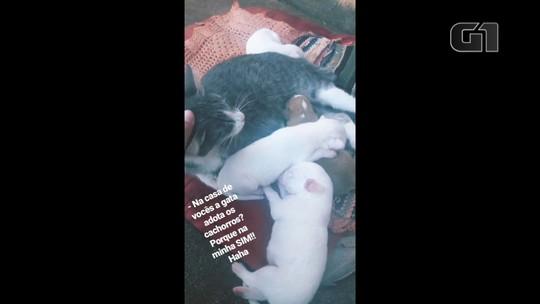 Gata adota e amamenta filhotes de cachorro: 'Virou uma mãezona', diz dona