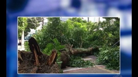 Árvore cai na avenida Braz de Aguiar e interdita trânsito, em Belém