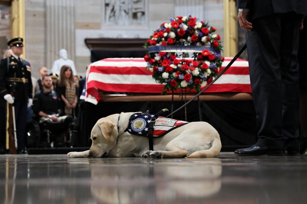 Cão Sully, do ex-presidente Bush pai, participa de velório nesta terça-feira (4) no Capitólio — Foto: Jonathan Ernst/Reuters