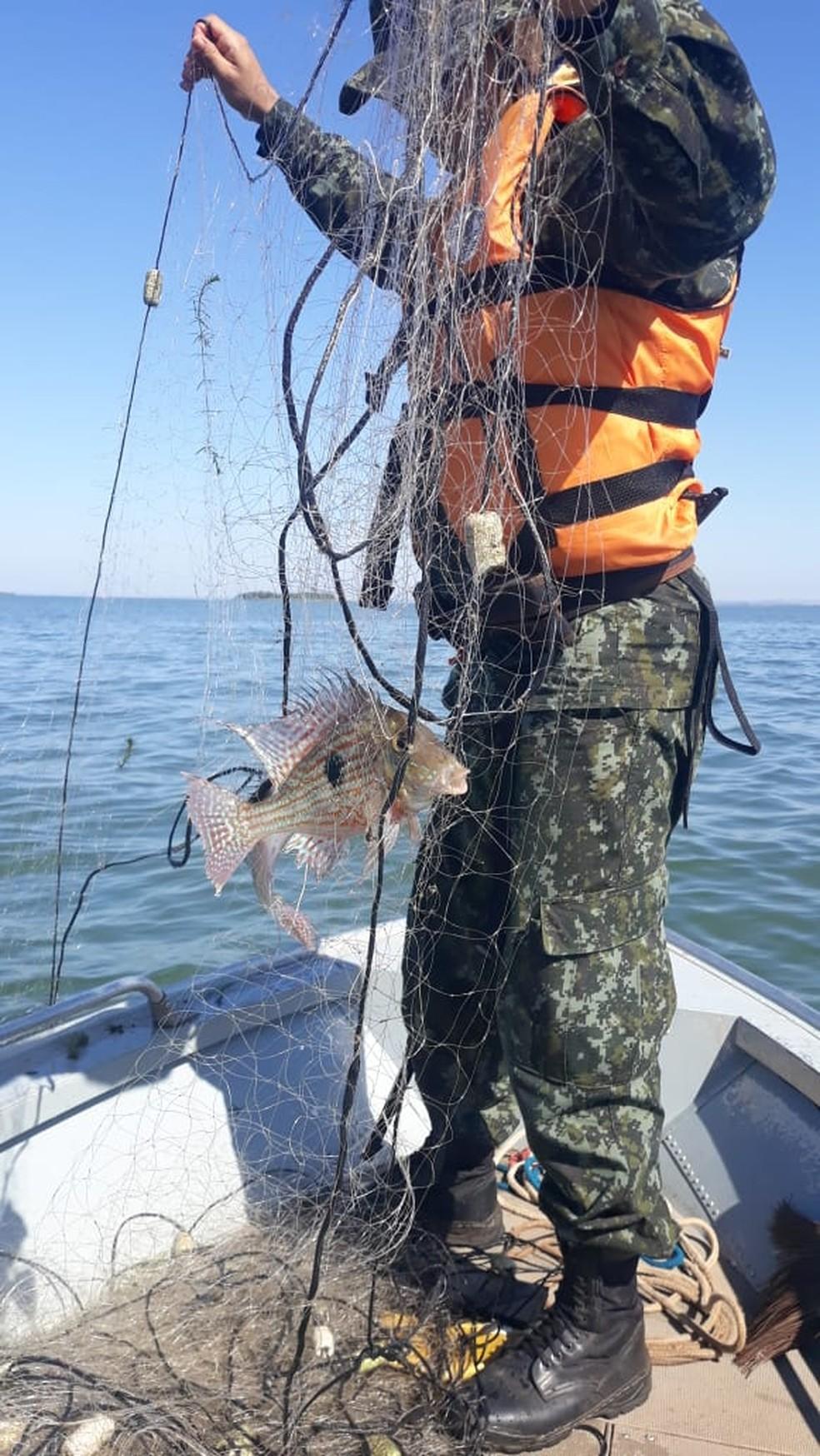 Nas redes de propriedade do infrator, a equipe encontrou peixes que ainda estavam vivos e foram devolvidos ao ambiente aquático. — Foto: Polícia Ambiental