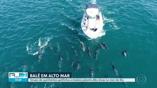 Grupo de mais de 500 golfinhos é visto no mar da praia de Copacabana