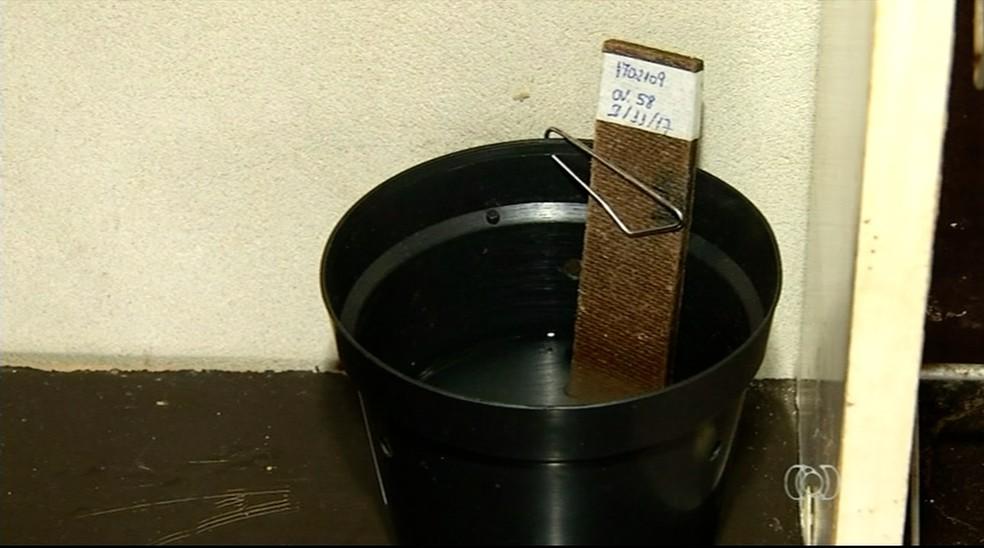 Armadilhas testam resistência do mosquito (Foto: Reprodução/TV Anhanguera)