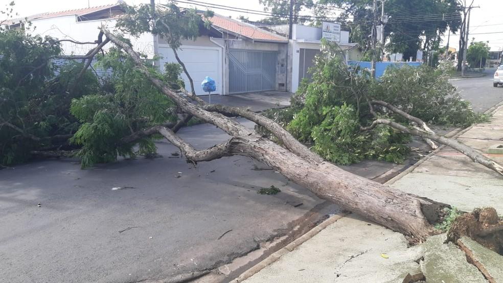 Queda de árvore interditou trânsito no distrito de Santa Terezinha em Piracicaba — Foto: Edijan Del Santo/EPTV