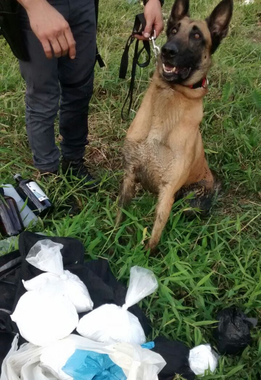 Cães farejadores auxiliam polícia a encontrar as drogas  (Foto: Divulgação/Polícia Militar)
