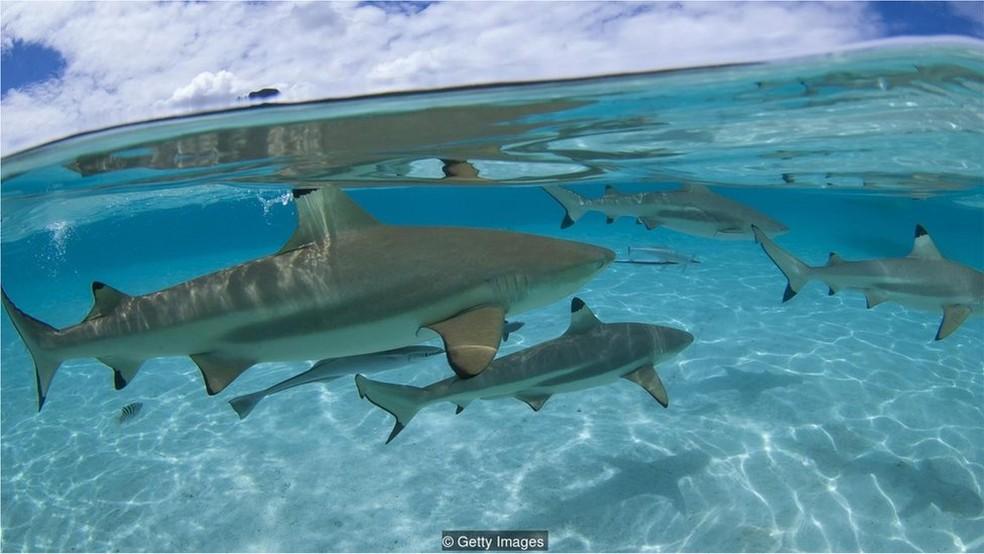 Enquanto mortes por ataques de tubarão na Austrália permanecem constantes, número de mordidas dobrou (Foto: Getty Images)