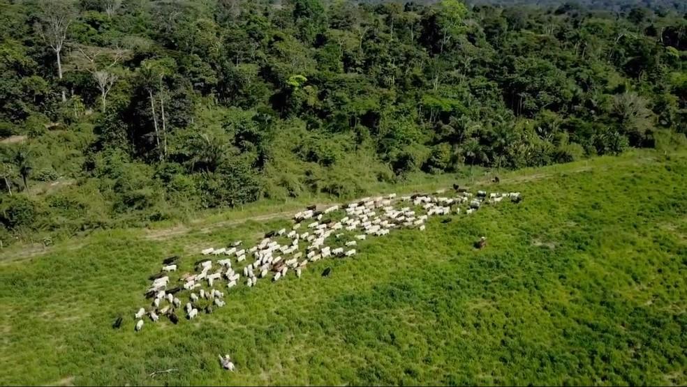 Exportação de gado teve aumento em MT neste ano — Foto: Divulgação/Pecsa