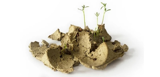 Embalagem feita com sementes pode ser plantada ao invés de ir pro lixo (Foto: Divulgação)