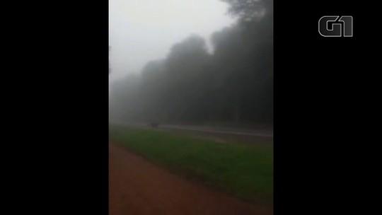 Filhotes de onça-pintada são flagrados ao atravessar rodovia no Parque Nacional do Iguaçu