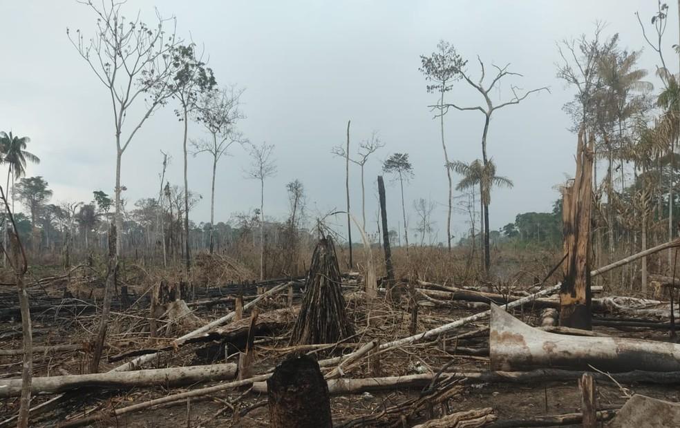 Dois são presos por invadir e desmatar unidade de conservação no interior do Acre  — Foto: BP-AC