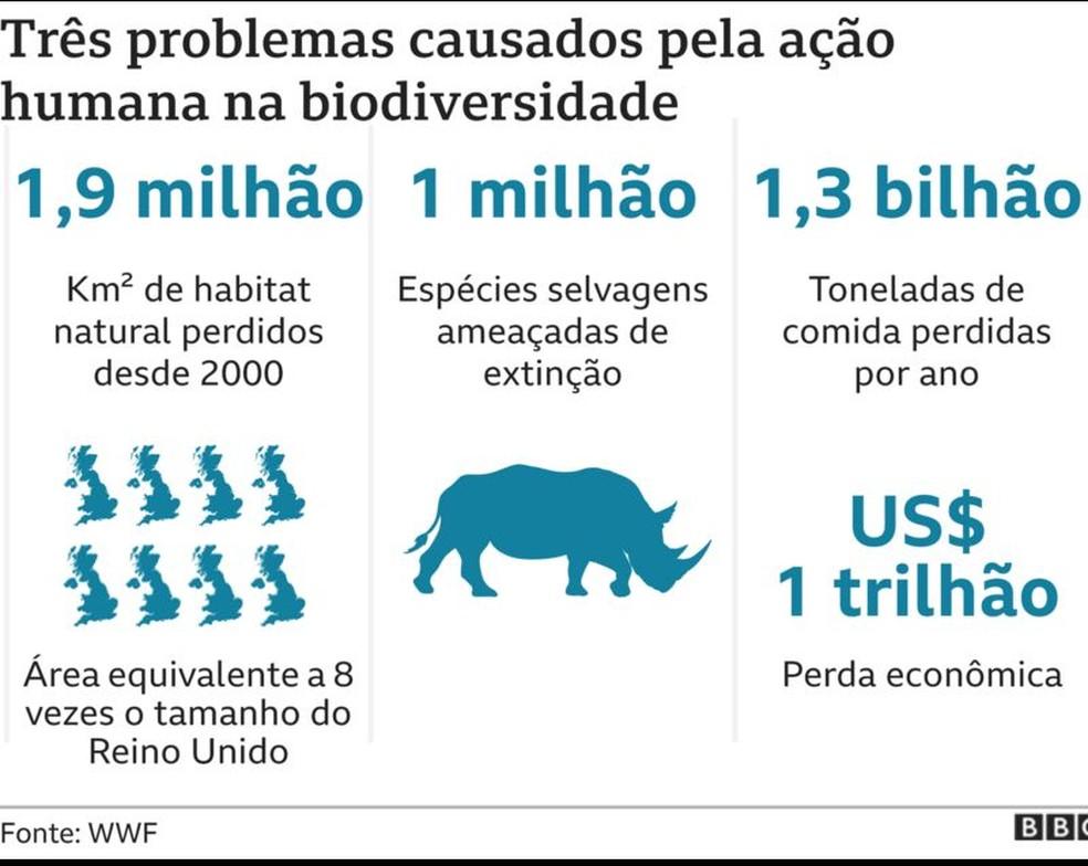 Três problemas causados pela ação humana na biodiversidade — Foto: BBC