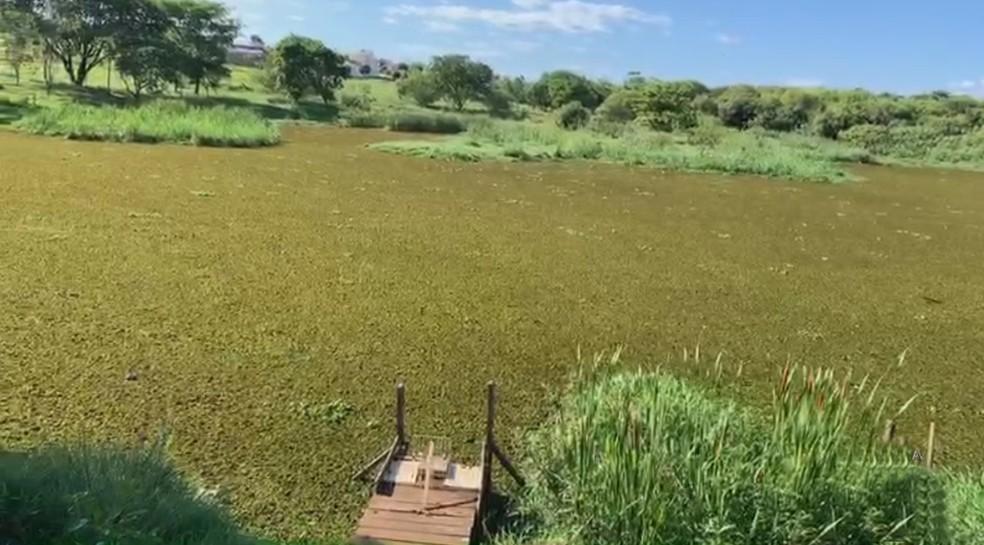Votuporanga-SP: Represa na área urbana está coberta por algas