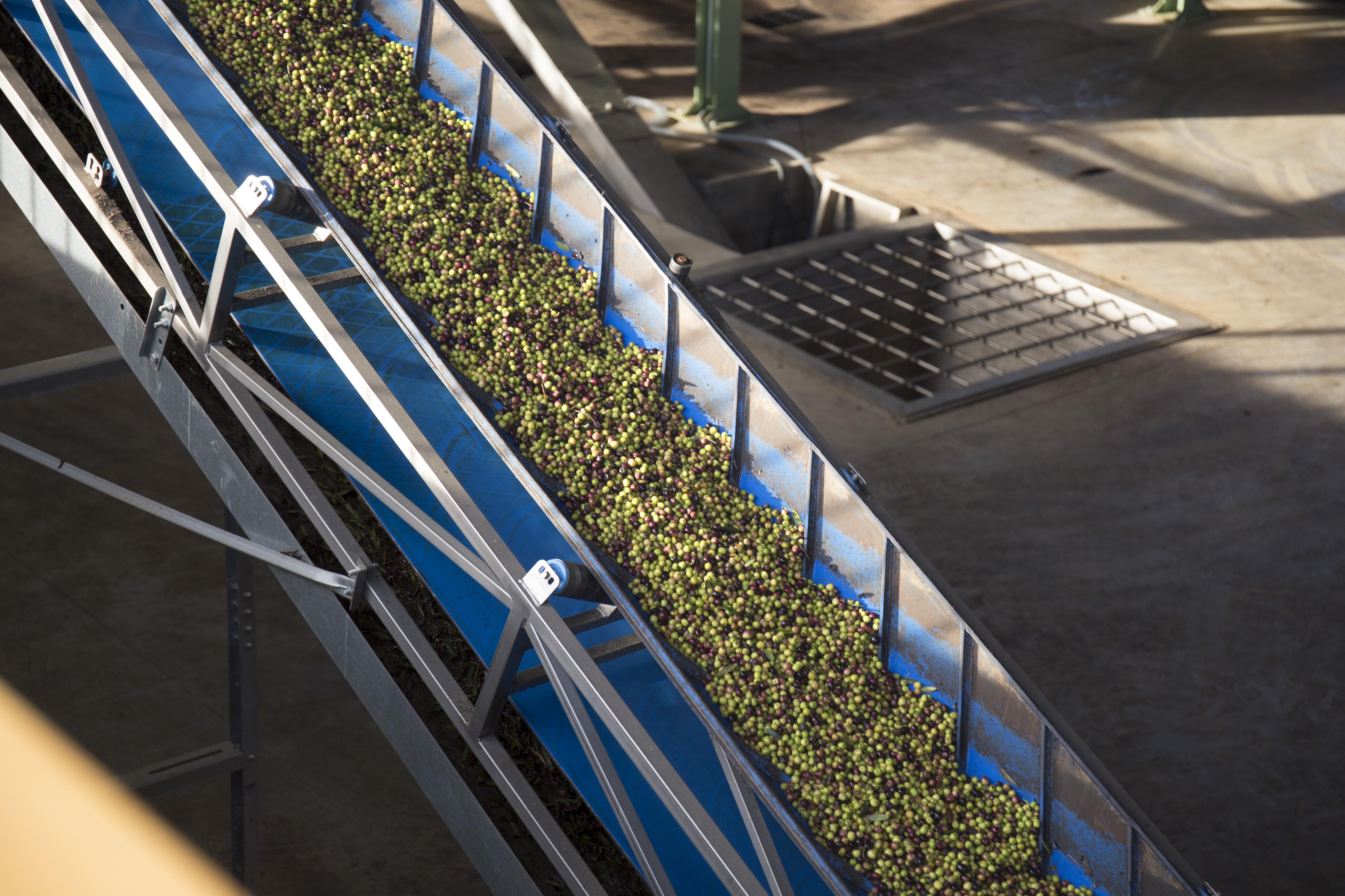 azeitona-lagar-azeite (Foto: Herdade Esporão)