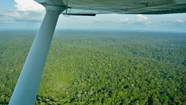 Floresta na Terra Indígena Zo'é (Foto: via BBC News Brasil)