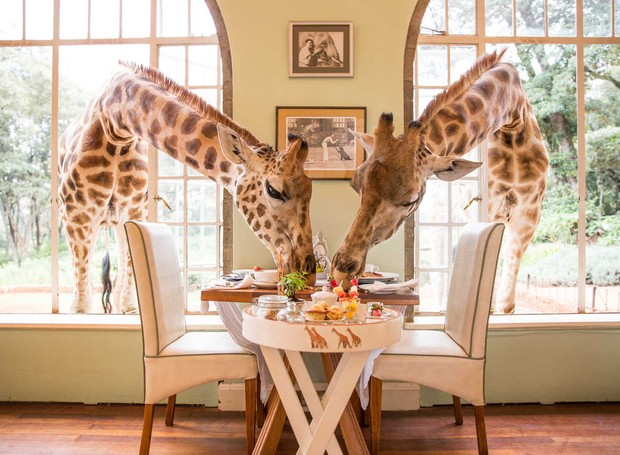 O Hotel Giraffe Manor, no Quênia, oferece contato direto com as girafas Rothschild, ameaçadas de extinção (Foto: Divulgação)