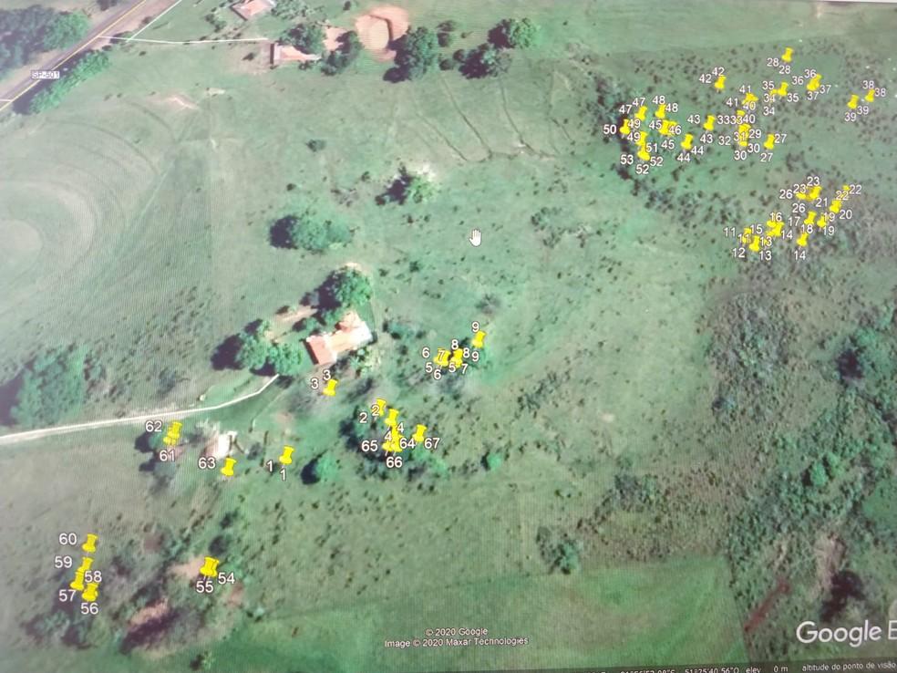 Supressão de árvores foi constatada em propriedade rural em Alfredo Marcondes — Foto: Polícia Ambiental