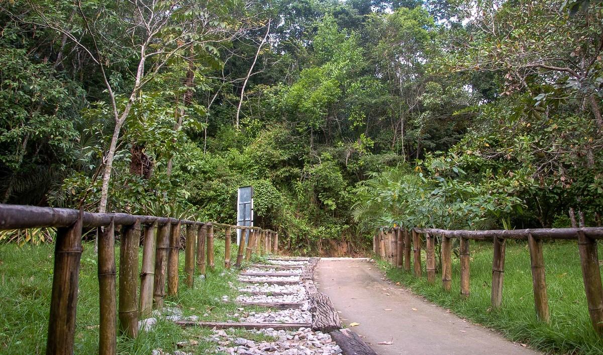 Parque Municipal de Maceió é rico em diversidade de espécies