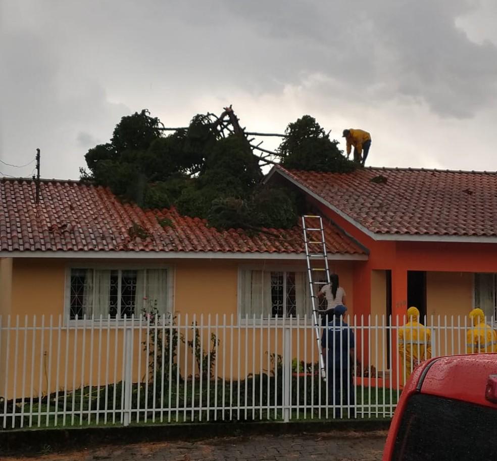 Árvore caiu em cima de casa em Curitibanos, em Santa Catarina. — Foto: Divulgação/Polícia Civil