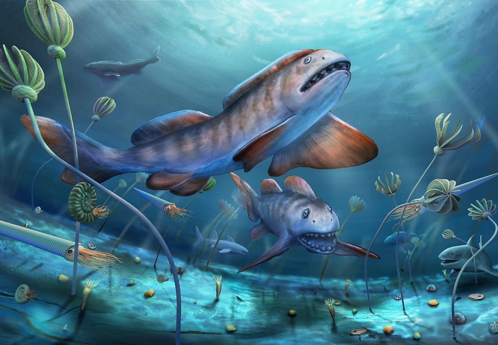 Fóssil de tubarão com dentes em forma de pétala é encontrado na China (Foto: YANG Dinghua)