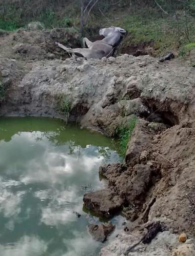 Jumentos mortos estavam dentro e na beiro do Rio Catolé (Foto: Divulgação/SOS Animais Itapetinga)