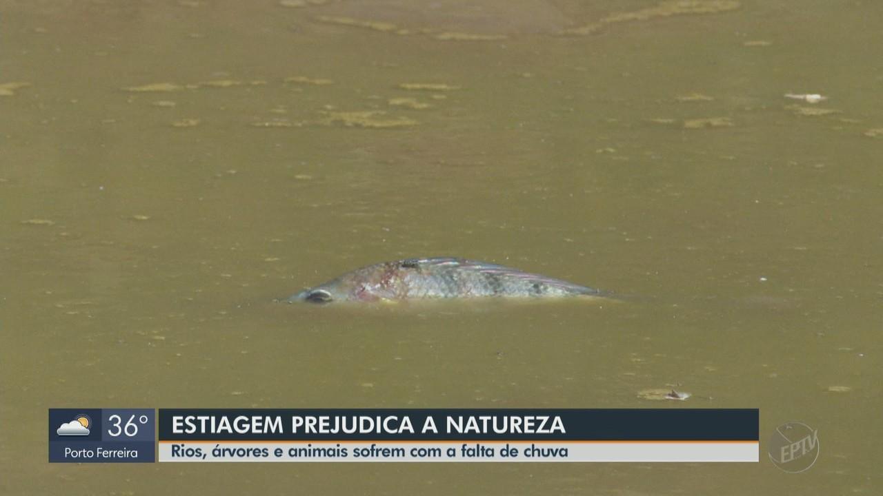 Rios, árvores e animais sofrem com a falta de chuva