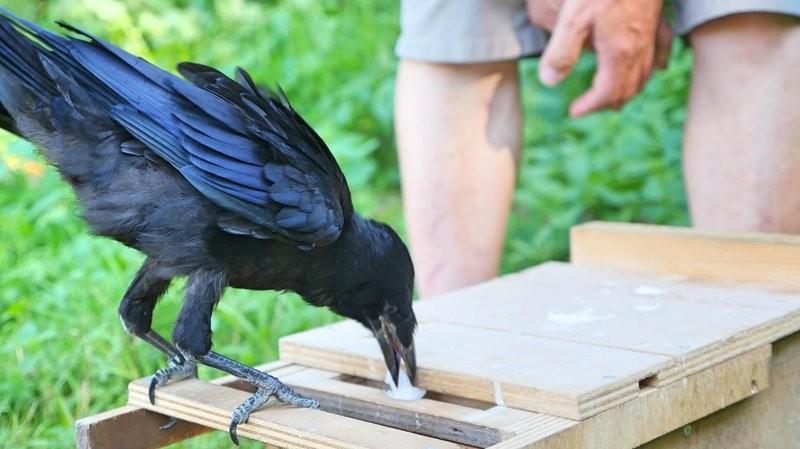 Parque francês usa aves para coletar lixo deixado pelos visitantes