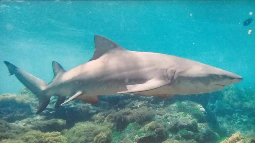 Tubarões não podem ser alimentados por humanos em Noronha — Foto: Léo Veras/Acervo pessoal