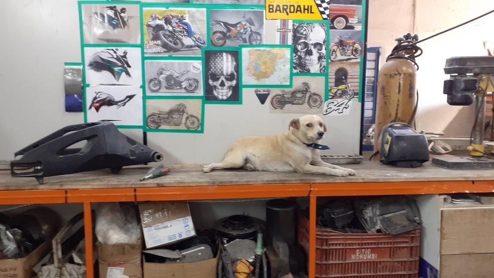 Agusta vive solta em oficina de Catanduva  — Foto: Arquivo pessoal/Jeferson Rodrigues