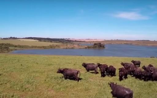 5 documentários brasileiros que se passam no campo