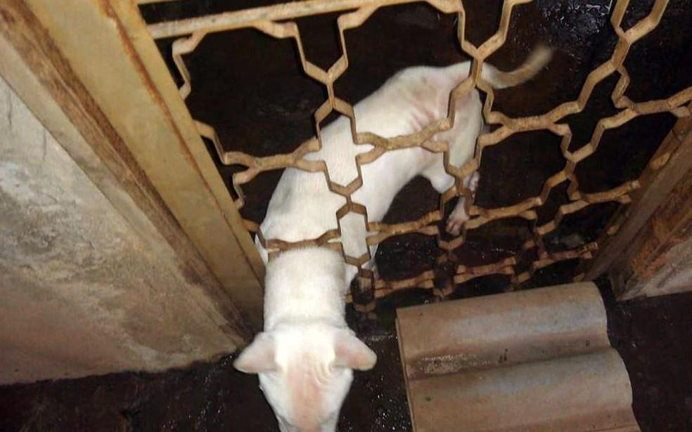 Cão em situação de maus-tratos em Araraquara — Foto: Polícia Ambiental/Divulgação