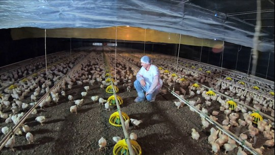 Carnes de porco e de frango acompanham alta nos preços do boi gordo
